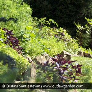 Edible gardens can be just as lovely as ornamental gardens, with the added bonus that the plants provide a tasty treat.