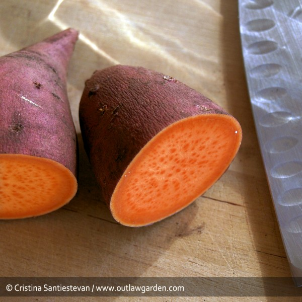 In order to grow your own sweet potatoes, first you need an old sweet potato