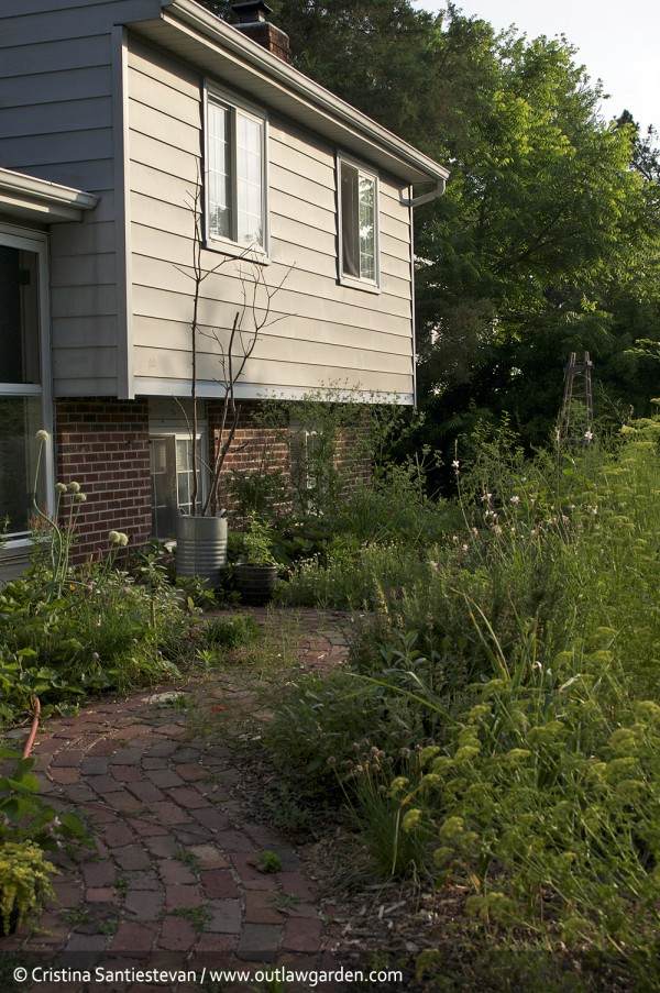 front path in early june