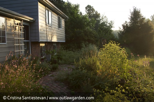 The outlaw garden at dawn