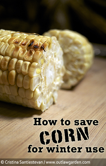 How to save corn for winter use