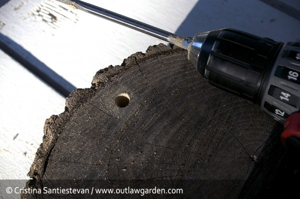 bee house first hole drilled