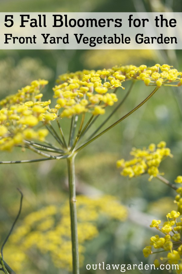 Five Fall Blooming Plants For The Front Yard Vegetable