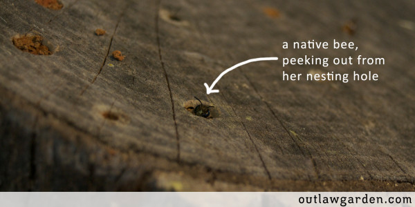 a native bee in a log